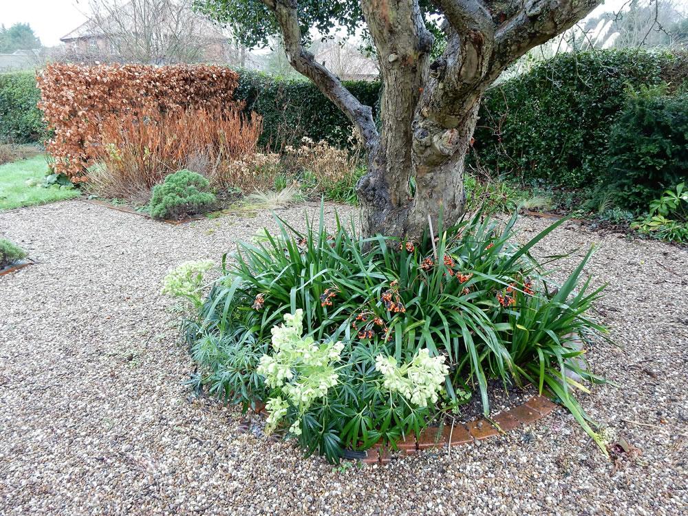 garden planting layouts